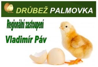 Kuře Páv Palmovka